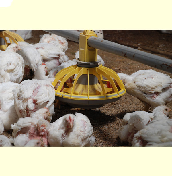 Automatic Feeding System supplier and manufacturer